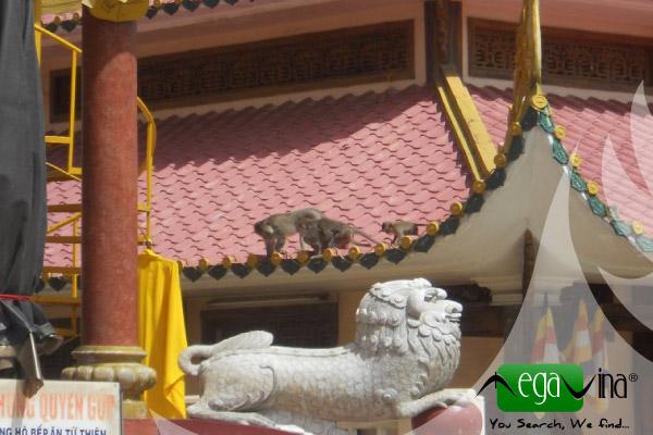 Singe sur toit du temple